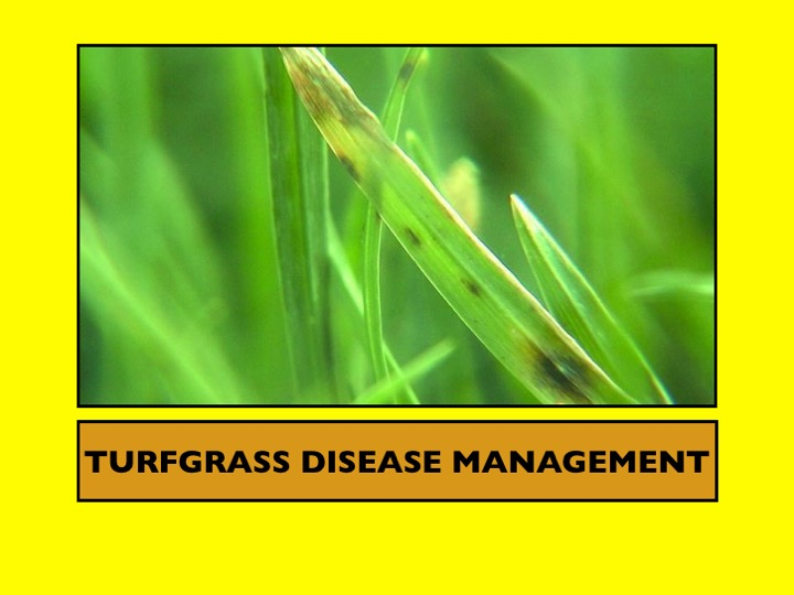 Turfgrass Disease Management