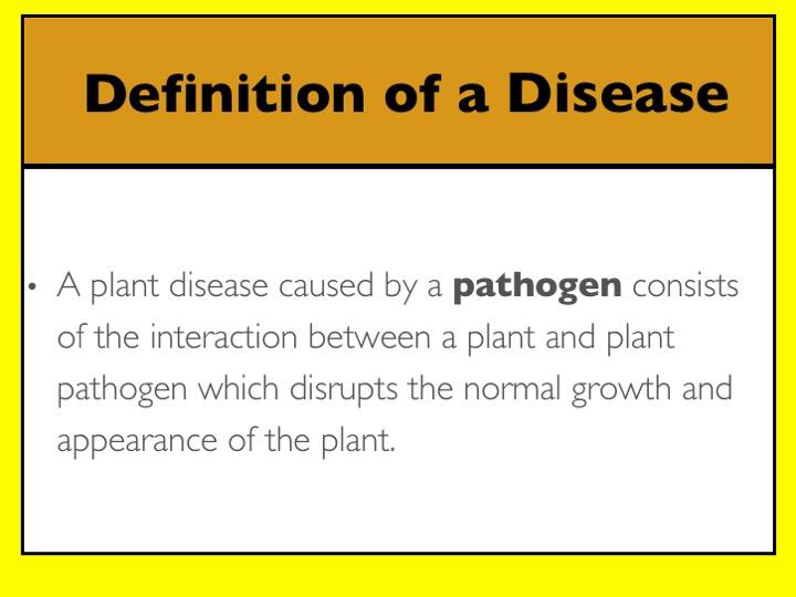 Turfgrass Disease Management