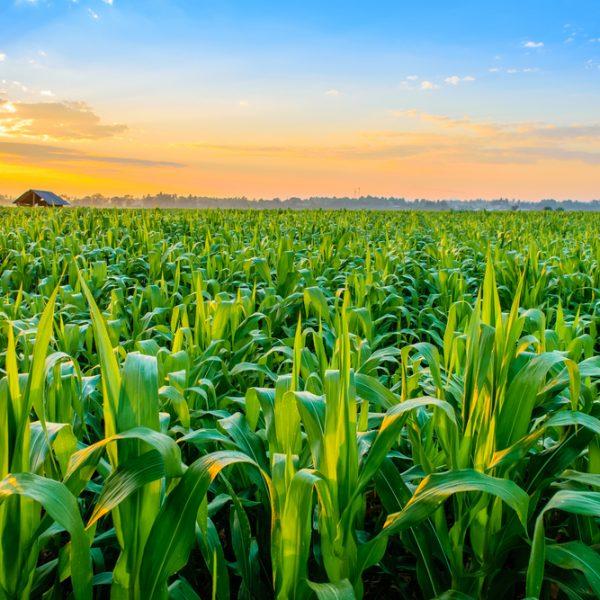 Agricultural Plant Pest Control