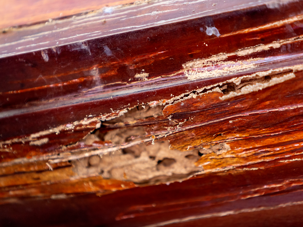 5-Hour Termite Category Course